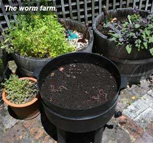 sustainable practices - worm farm